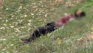 Şanlıurfalı genç iş adamı öldürüldü