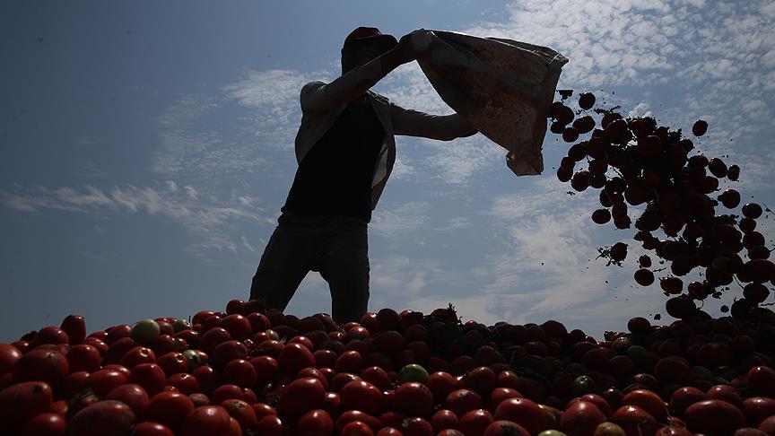 Mevsimlik tarım işçisi göçü başladı