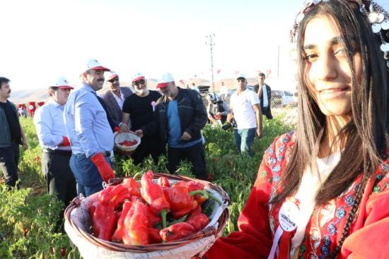 Çiftçi: Şanlıurfa'mızın değerlerini tanıtmaya devam ediyoruz