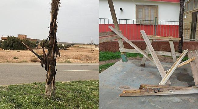 Ceylanpınar'da Palmiye ağaçları ve parklara zarar verildi