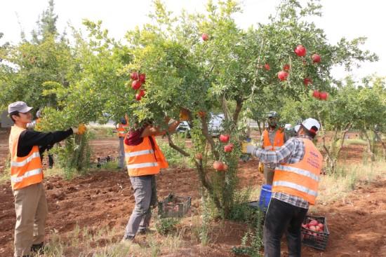 Dar gelirli ailelere meyve ikramı
