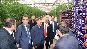 Viranşehir için topraksız sera işletmeciliği girişimi