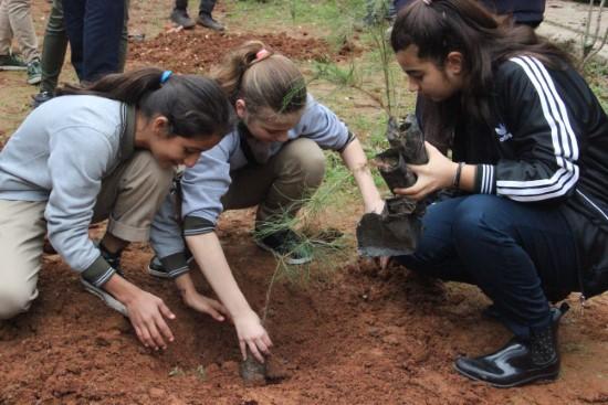 Öğrenciler okulun bahçesine fidan dikti