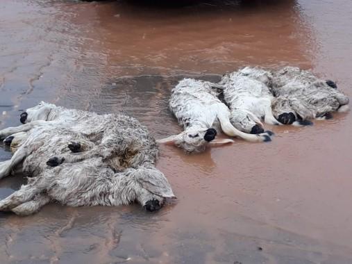 Sel duvarları yıkıp hayvanları telef etti