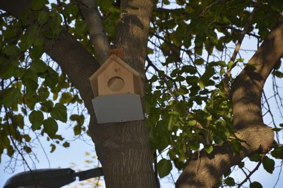 Siverek Belediyesi'nden ağaçlara kuş yuvası