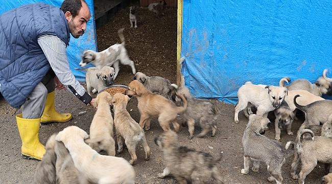 Büyükşehir 40 bin kilogram kedi köpek maması alacak