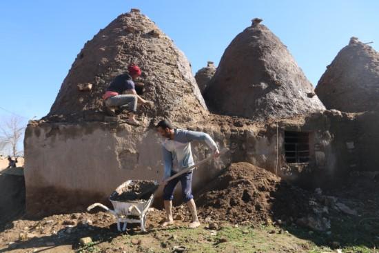 Harran'ın konik kubbeli evlerine bakım