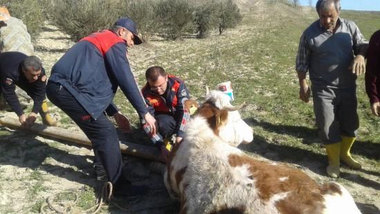 Su kuyusuna düşen inek itfaiye tarafından kurtarıldı