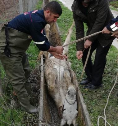 Sulama kanalında sıkışan at kurtarıldı