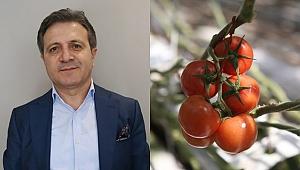 Dünya, Türk domatesinden vazgeçemiyor