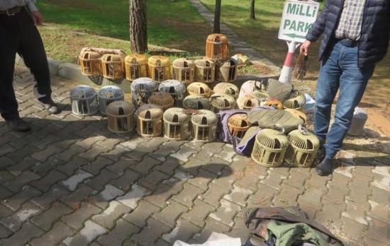 Şanlıurfa'da kaçak avlanan 28 kınalı keklik doğaya bırakıldı