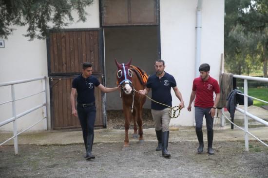 Suruç'un şampiyon atlarına