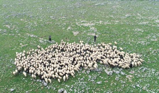 5 bin lira aylığa çoban bulamıyorlar