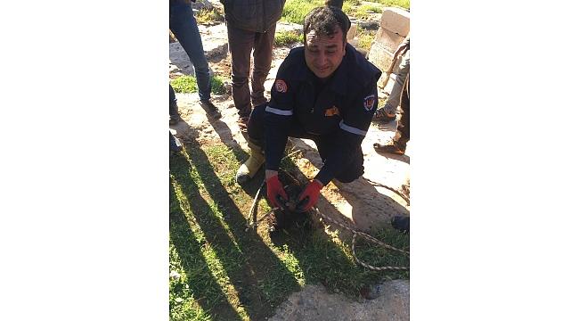 Foseptik çukura düşen oğlak itfaiye ekiplerince kurtarıldı.