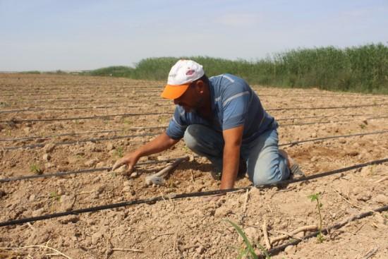 Ramazanda tarım işçilerinin zorlu mesaisi