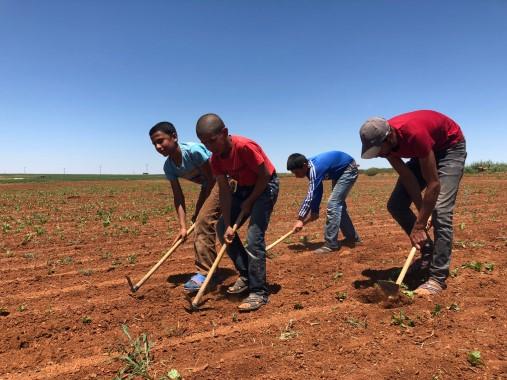 Tarım işçileri ekmek kavgasını sıcak altında sürdürüyor