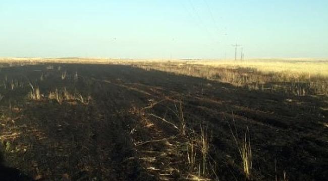20 dönüm buğday tarlası kül oldu