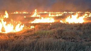 Anız yakılması hayvan ve tarlalara zarar veriyor