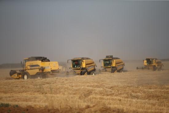 Dev işletmenin kaliteli buğdayına yurt dışı ilgisi