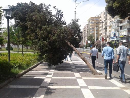Rüzgardan etkilenen ağaçlar yan yattı