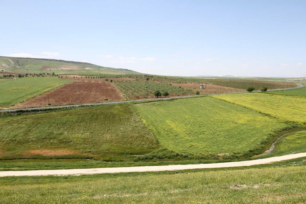 Şanlıurfa'da arazi toplulaştırma çalışmaları devam ediyor