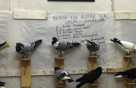 Şanlıurfa'da güvercin almak ev almaktan daha zor