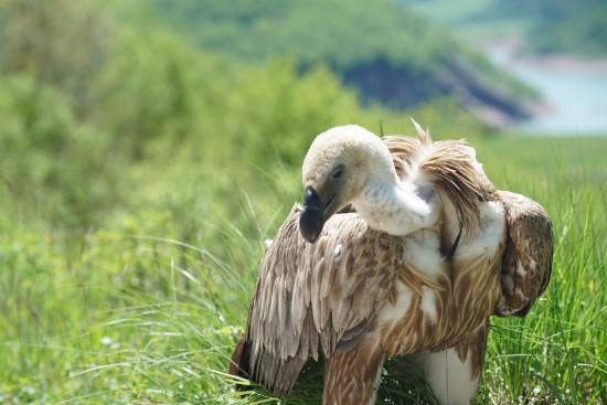 Uçarak geldiği Şanlıurfa'dan THY Kargo ile geri döndü