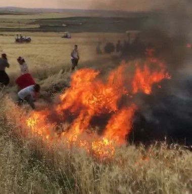 Yangının tarlalarına sıçramaması için etten duvar ördüler