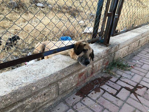 Kafası sıkışan köpeği itfaiye kurtardı