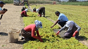 Tarım işçilerinin yaşam şartlarını iyileştirme çağrısı
