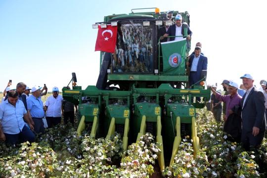 Geçen yıl 2 milyon 570 bin ton kütlü pamuk ürettik