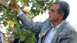 Şanlıurfa ve Gaziantep arasında fıstık krizi