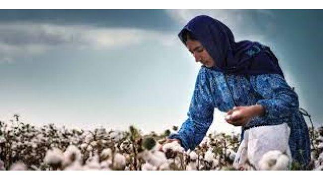 Pamukta kirlenmeyi önleme komisyonundan çiftçilere uyarı
