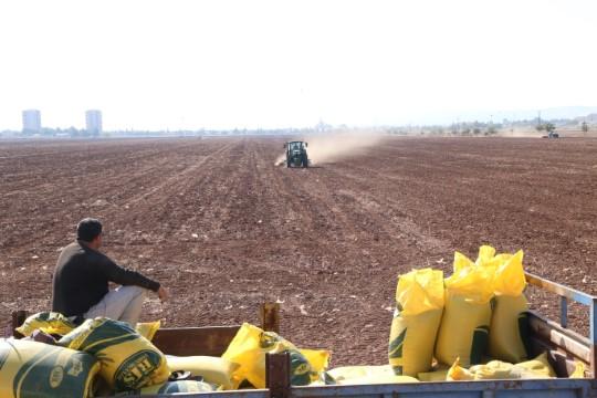 GAP çiftçisinin hububat ekim telaşı