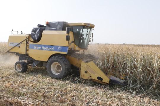 GAP'ın başkenti Şanlıurfa'da mısır hasadı başladı