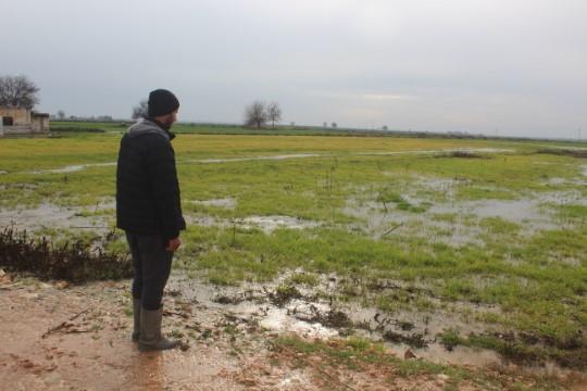 Şanlıurfa'da etkili olan sağanak ekili arazilere zarar verdi