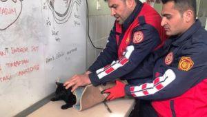 Şanlıurfa'da kedi kurtarma operasyonu