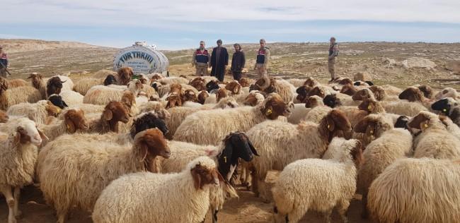 Şanlıurfa'da hayvan hırsızları tutuklandı