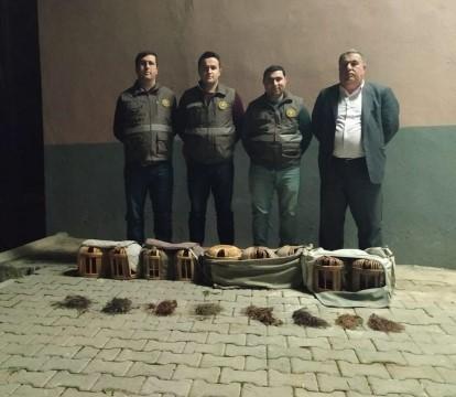 Şanlıurfa'da kaçak avlanmış 9 kınalı keklik ele geçirildi