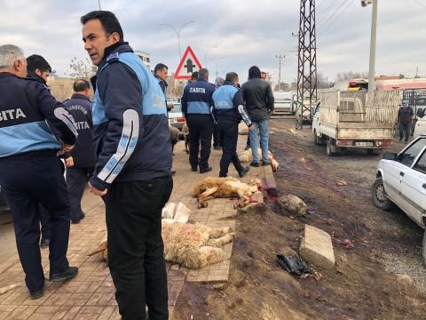 Viranşehir belediyesinden sağlık Tacirlerine Operasyon