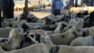 Korona virüsü bölgenin en büyük hayvan pazarını vurdu