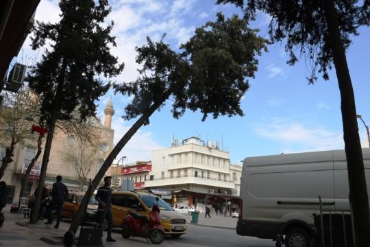 Eğilen ağaç tehlike saçıyor