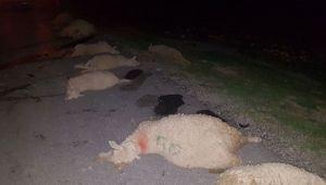 Otomobilin çarptığı 10 koyun telef oldu