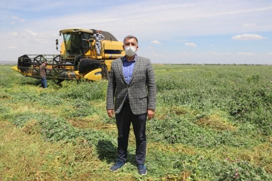 Pamuk tarlaları ekonomiye değer katıyor