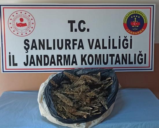 Şanlıurfa'da uyuşturucu ve kaçakçılık operasyonu