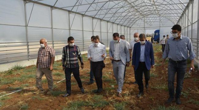AK Parti Milletvekili Özşavlı'nın Viranşehir ziyareti