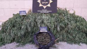 Şanlıurfa'da uyuşturucu operasyonu: 16 tutuklama (Videolu Haber)
