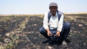 Siverek'te 50 dönümlük buğday ekili tarla yandı (Videolu Haber)