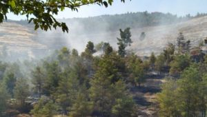 Halfeti Çekem dağındaki orman yangını söndürüldü (video)
