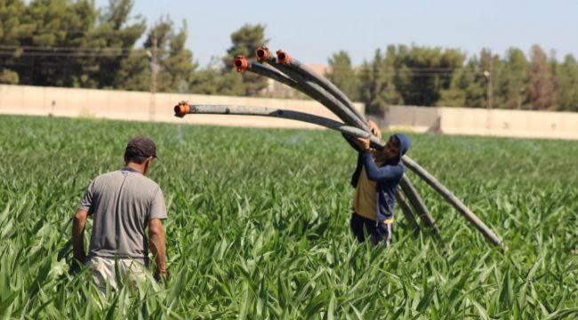 Şanlıurfa'da tarım işçileri bayramda tarlanın yolunu tuttu